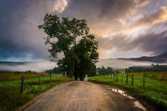 Baum entlang einem Schotterweg, auf einem nebeligen Morgen an der Cades Bucht, groß Stockfoto