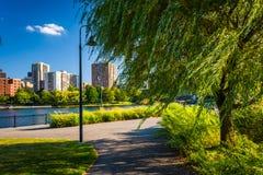 Baum entlang einem Weg und Gebäude in Boston gesehen von North Point Stockbild