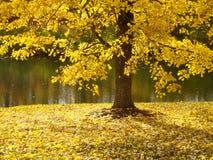 Baum entlang Fluss im Fall Lizenzfreies Stockfoto