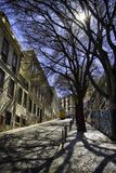 Baum entlang Straße, Lissabon, Portugal Lizenzfreie Stockfotografie