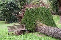 Baum entwurzelte und fiel nach dem Sturm Stockfotos