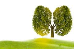 Baum-förmige Bilder des Lungengrüns, medizinische Konzepte, Autopsie, Anzeige 3D und Tiere als Element stock abbildung