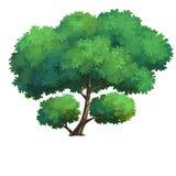 Baum für Karikatur Stockfoto