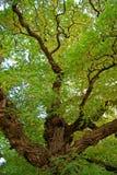 Baum-Farben Stockbild