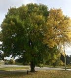 Baum-Farben Stockbilder
