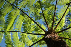 Baum-Farn Stockfotografie