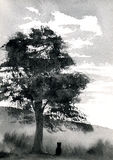 Baum-Feld Stockfoto