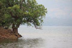 Baum am Flussufer Stockfoto