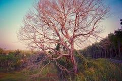 Baum Forest Wallpaper Art und Hintergrund Lizenzfreies Stockfoto