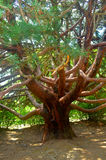 Baum in Form einer Krake Lizenzfreie Stockbilder