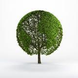 Baum formte wie die Weltkarte Lizenzfreie Stockfotografie