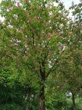 Baum am Frühling Stockbilder