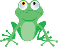 Baum-Frosch Lizenzfreies Stockbild