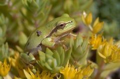 Baum-Frosch und Blumen Stockbild
