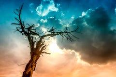 Baum gebrannt durch Blitz Stockfoto
