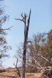 Baum gebrannt durch Blitz Stockfotografie
