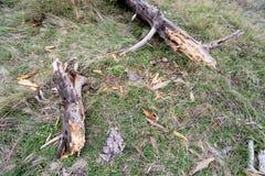 Baum gebrochen durch Blitz Lizenzfreies Stockbild