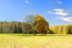 Baum gefangen genommen an der unterschiedlichen Jahreszeit Lizenzfreie Stockfotos