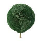 Baum geformt als die Erde, die Amerika gegenüberstellt Lizenzfreie Stockfotografie