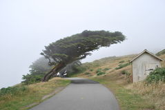 Baum geformt durch Wetter Stockfotografie