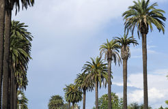Baum gegen den blauen Himmel Stockfotografie