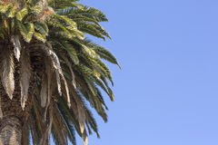 Baum gegen den blauen Himmel Stockbilder