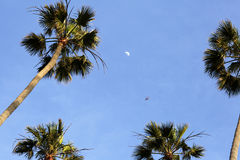 Baum gegen den blauen Himmel Stockfoto