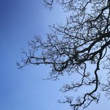 Baum gegen den blauen Himmel Stockfotos