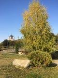 Baum gegen den Himmel Lizenzfreies Stockfoto