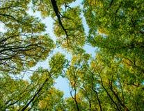 Baum gegen den Himmel Lizenzfreies Stockbild