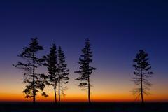 Baum gegen den Himmel mit Sonnenuntergang Stockfotos
