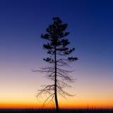 Baum gegen den Himmel mit Sonnenuntergang Lizenzfreies Stockbild