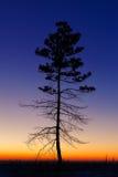 Baum gegen den Himmel mit Sonnenuntergang Lizenzfreie Stockfotografie