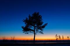 Baum gegen den Himmel mit Sonnenuntergang Stockfotografie