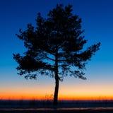 Baum gegen den Himmel mit Sonnenuntergang Lizenzfreie Stockfotos