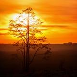Baum gegen den Himmel mit Sonnenuntergang Stockbilder