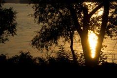 Baum gegen den Hintergrund des Wassers bei Sonnenuntergang Stockbilder