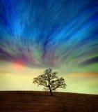 Baum gegen einen surrealen Himmel Stockbild