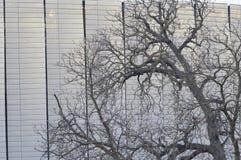 Baum gegen Stadion Lizenzfreies Stockbild