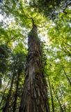 Baum gehen Grün Stockfoto