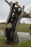 Baum geschlagen durch Blitz Stockfotografie