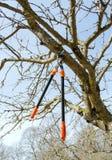 Baum geschnittene Orange zwei behandeln Schererfrühlingsgarten Lizenzfreies Stockbild
