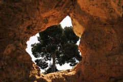 Baum gestaltet durch Felsen Lizenzfreies Stockfoto