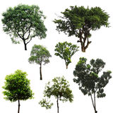 Baum getrennt Stockbild