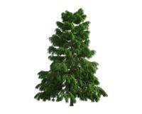 Baum getrennt auf einem weißen Hintergrund Stockbilder