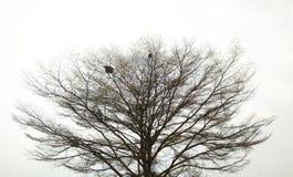 Baum getrennt auf weißem Hintergrund Lizenzfreie Stockfotografie