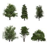 Baum getrennt auf weißem Hintergrund Lizenzfreie Stockbilder