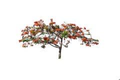 Baum getrennt auf weißem Hintergrund Lizenzfreies Stockfoto