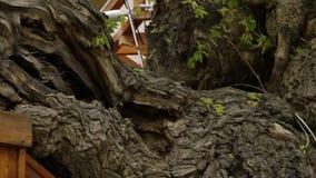 Baum gewachsen in Struktur stock video