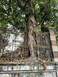 Baum gewachsen um einen Stahlzaun stockfoto